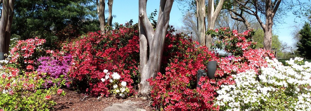 Caswell Horticulture Club